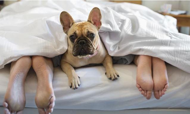 Hotéis se adaptam para receber hóspedes com animais de estimação