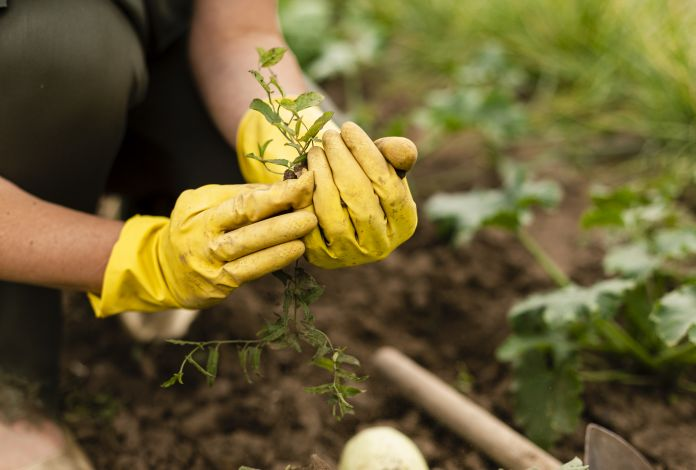 Plantando em casa: Como ajudar o meio ambiente cultivando horta caseira e compostando as sobras orgânicas